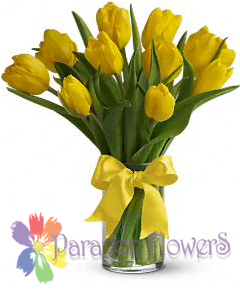 Spring Yellow Tulips