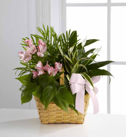 Sympathy For The Home Floral Baskets Living Spirit Dish Garden