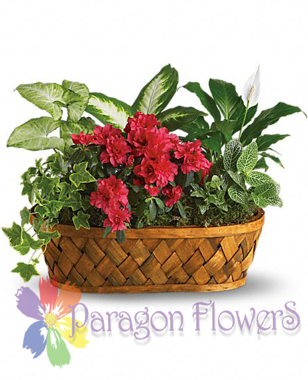 Combo Basket Green Plants and Blooming Plants