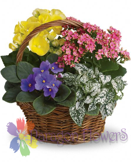 Spring Blooming Basket